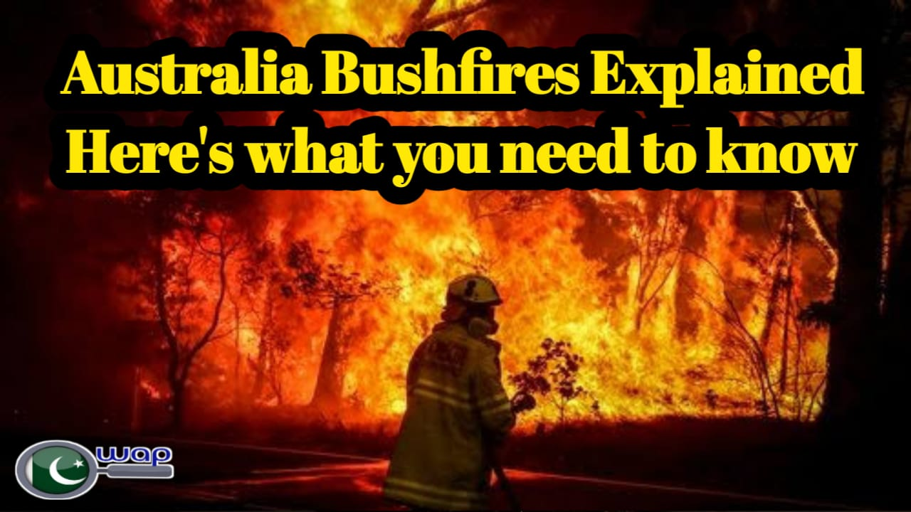 Australia Bushfires Explained   Here's what you need to know